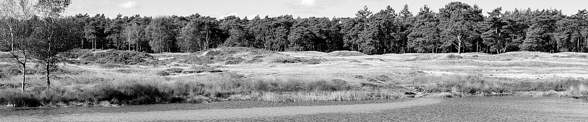 bos en heide landschap
